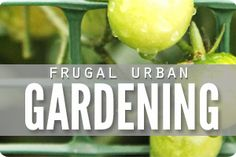 Get healthy with a Frugal Natural Living 31 Day Challenge - a full month of baby steps in real food, easy DIY's, natural living & saving money - for free! Clean Fifteen, Healthy Eating Meal Plan, Homemade Toothpaste, Monthly Meal Planning, Building A Raised Garden, Easy Meal Plans, Real Food Recipes, Food Tips, Ways To Save Money