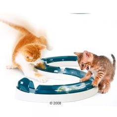 Fun and frolics for your cat with the Catit Design Senses Play Circuit! This play circuit entertains while engaging your cat's natural senses of touch,. Cool Cats, Benadryl For Cats, Siberian Cats For Sale, Gatos Cool, Cat Tent, Felt Cat, Cat Accessories, Cat Furniture, Furniture Design