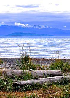 Beach logs/Cook Inlet/Homer