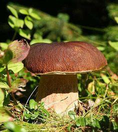 I funghi, potenti integratori di vitamina D e non solo - Ambiente Bio
