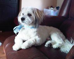 Ballistic BJ   RIP sweet pup