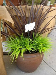 container garden plants - Google Search