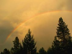 Lost in the pines: written in Yellowstone National Park, July 2012.   Wyoming rainbow.