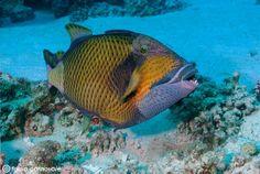 La correzione della dominante blu nella fotosub - Dominante blu e fotografia subacquea