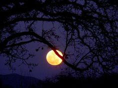 Preparing for and Participating in a Full Moon Ritual: Full Moon Silhouette