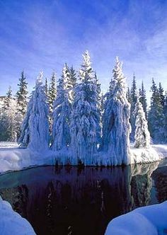 Chena Hot Springs - Alaska. Can't wait to see this!