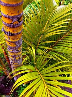 'Palm' - Plant Life Nature in Kula Maui Hawaii Maui Hawaii, Hawaii Travel, Kula Maui, Hawaiian Plants, Spring Images, Palm Plant, World Images, Warm Spring, Spring Colors