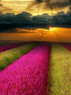 beautiful field of flowers #garden #pretty #pinkflowers #flowerfield #flowers #nature #yellowflowers #sunset #L4L #amazing #outdoors #outdoor #tagforlikes