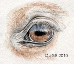 Draw Horse Eyes Step by Step: Horse Eye - Continue Layering Color Horse Drawings, Animal Drawings, Pencil Drawings, Art Drawings, Drawing Lips, Drawing Animals, Realistic Eye Drawing, Horse Sketch, Pencil Drawing Tutorials