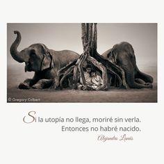 Si la utopía no llega, moriré sin verla. Entonces no habré nacido. #Umbrales #AlejandroLanus #Aforismos Places To Visit, Lion Sculpture, Elephant, Food And Drink, Geek Stuff, Cooking Recipes, Statue, Animals, Gumbo