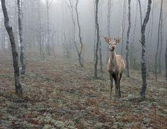 Fairy-tale deer | Tamara