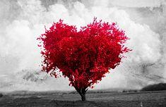 fotos de amor - Pesquisa Google