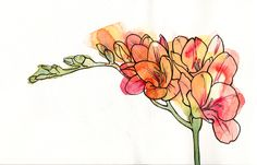 Freesia by JaneDautant on DeviantArt Watercolor Artists, Abstract Watercolor, Watercolor Flowers, Watercolor Paintings, Watercolors, Fresia Flower, Flower Sleeve, Botanical Illustration, Flower Tattoos