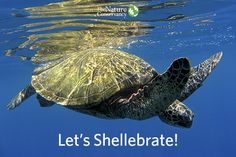 Help the Conservancy Protect Sea Turtles with an Earth Friendly Donation - The Nature Conservancy