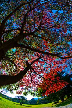 tree- what amazing colors together!