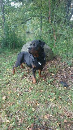 Rottweiler my best friend
