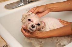 Baño de perro