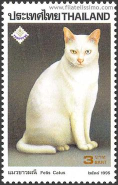 Thailand postage stamp. Love the cat's expression...