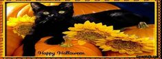 Black Cat Happy Halloween Facebook Cover