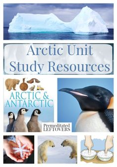 Arctic Unit Study Resources- These resources include learning materials on the Arctic and Inuit people. You will find educational videos, crafts, and Science Activities, Teaching Science, Primary Teaching, Kindergarten Science, Science Resources, Science Ideas, Science Experiments, Artic Animals, Montessori