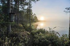 Kesäkuvakisa 2014 - heinäkuun kuvia | Yle Uutiset | yle.fi > Kesäaamun rauha,Pekka Hatunen