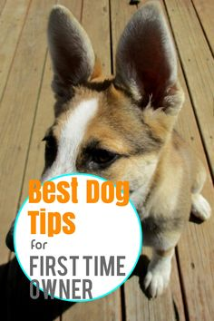 Fast And Easy Ways To Train Your pet *** More info could be found at the image url. Dog Care Tips, Pet Care, Dog Spay, Different Dogs, Dog Training Tips, New Tricks, Take Care, Fleas, Dog Owners