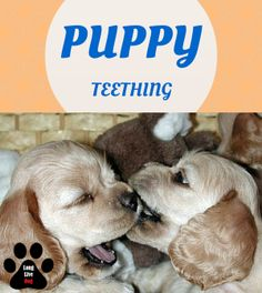 7 Different Ways To Handle Your Puppy's Teething http://www.longlivedog.com/how-to-handle-puppy-teething/