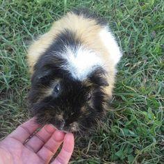 8Ball, my guinea pig