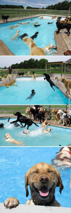 For the happiest day ever, have a dog pool party!