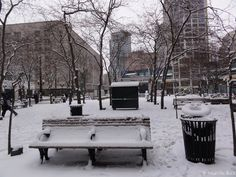 Snow 2012, Westlake Park Downtown Seattle