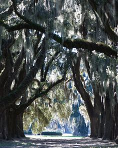 Repin if you like! 8x10 Fine Art Print Digital Photography Nature Cathedral Ford Plantation , Low Country, South Carolina, Gift Ideas, Home decor
