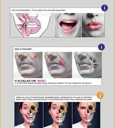 Anatomy Next store - Online EBOOK en français pour les étudiants Facial Anatomy, Head Anatomy, Gross Anatomy, Anatomy Poses, Anatomy Study, Anatomy Art, Anatomy Reference, Anatomy Images, Dental Anatomy