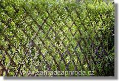 Heart-Stopping DIY Living Fence Art Ideas - Terenosonline Fence Art, Diy Fence, Living Willow Fence, Fences Alternative, Cornwall Garden, Evergreen Bush, Willow Garden, Natural Pond, Outdoor Wall Art