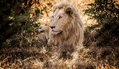 Sud Africa – Leoni