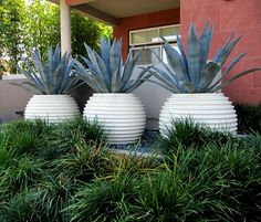 groove-pots-agave-475x390
