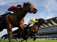 Tipstermaster provides you the horse race betting tips. We have experience of 40 years in horse racing and with that experience, we created proven winning methods that will surely help you in horse betting. Call us at Free Horse Racing Tips, Horse Racing Betting Tips, Types Of Horses, Sport Of Kings, Sports Picks, Horse World, Sports Betting, Horse Pictures, Thoroughbred