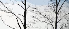 Birds in Trees Photo Greeting Card Nature by overthefenceart