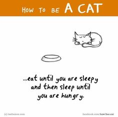 That's cats for you from Jeanette Brink Crazy Cat Lady, Crazy Cats, How To Cat, Amor Animal, Cat Comics, Photo Chat, Cat People, Cat Quotes, Cat Memes