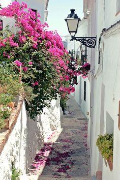 Bougainvillea in the alley in Frigiliana, Málaga, Spain by Nacho Coca. Beautiful World, Beautiful Places, Beautiful Pictures, Bougainvillea, Nerja, Malaga Spain, Andalusia Spain, Spain Travel, Places To Go