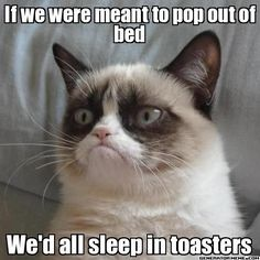 "Grumpy Cat case for why we weren't meant to ""pop out of bed"" :)"