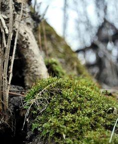 Moss by Dolbsha