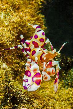 shrimp2July21-13 by divindk *