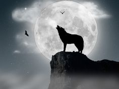 The call of a lone wolf...haunting and beckoning.