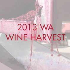 A look at 2013's Washington Wine Harvest