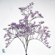 Limonium, $10.99 per bunch, comes in purple, white. Range from 5-8 stems per bunch (sold by the bunch)  - Each stem has a spray of several small blooms  - Average stem length is 20 to 27.5 inches  - Limonium are available year round   The long vase life of this filler flower makes it an excellent addition to your wedding bouquets or flower decorations, like centerpieces.
