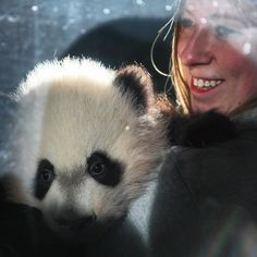 Zookeeper Shellie Pick shows 4-month old baby panda Bei Bei to the world at @smithsonianzoo! #pandastory #cute #animal by wheresandrew