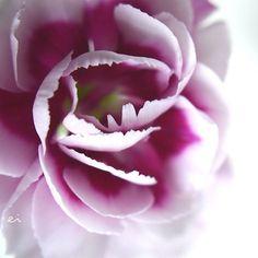 13:30 #photo #photography #picture #flowers #flowerslovers #flowerzdelight #ig_flowers #flowersofinstagram #flowerstalking #softfocus #flowersandmacro #pasandha__flowers #macrophotography #naturelover_gr #tv_flowers #ig_japan #ig_artistry #jj_still_life #floral_perfection #macro_freaks #macroclique #fs_light #macro_spotlight #panasonic #lumixg6 #sigma #tv_depthoffield #tv_closeup #japan #sapporo