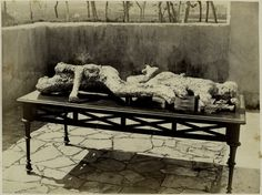 Pompei, Catalogue of Giorgio Sommer's pictures - Wikimedia Commons
