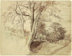 """""""Trees in a Lane, perhaps at Ambleside,"""" 1847. John Ruskin (1819 – 1900). Pencil, black and brown ink, and ink wash, 17 5/8 x 22 5/8 inches. Ruskin Foundation (Ruskin Library, Lancaster University)"""