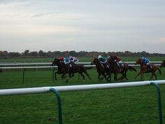 Should You Trust the Best Horse Racing Tips Online?